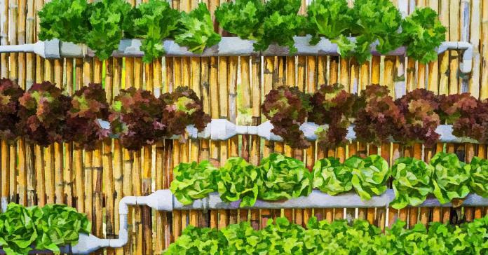 Most Suitable Plants For Vertical Garden