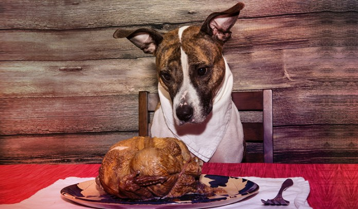 3-you-deed-your-pet-people-food