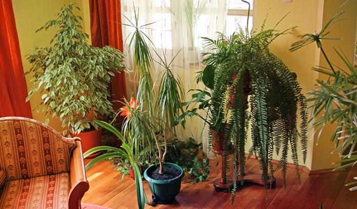 4-keep-houseplants