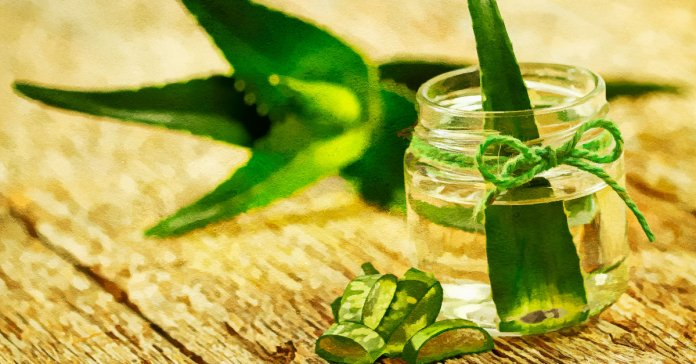 Aloe Vera Gel Is Good For Skin And Hair