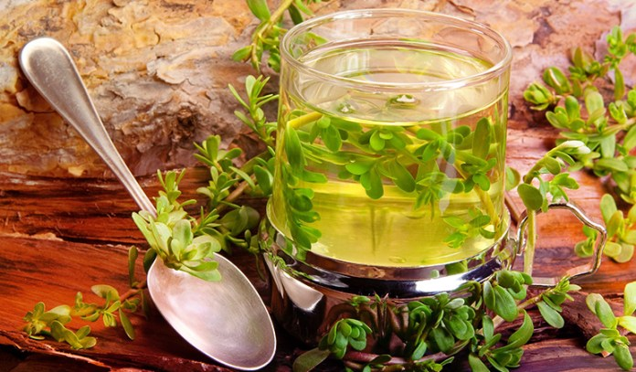Nootropic Supplements to Boost Brain Power Bacopa Monnieri