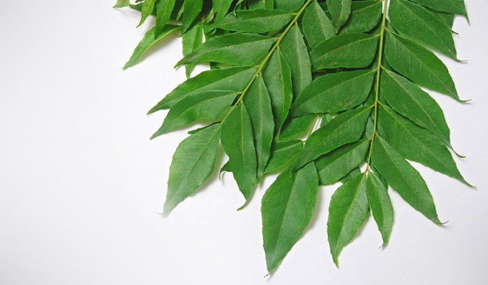 Curry leaves are nutritious and stimulate the growth of hair follicles, thus helping treat alopecia areata.