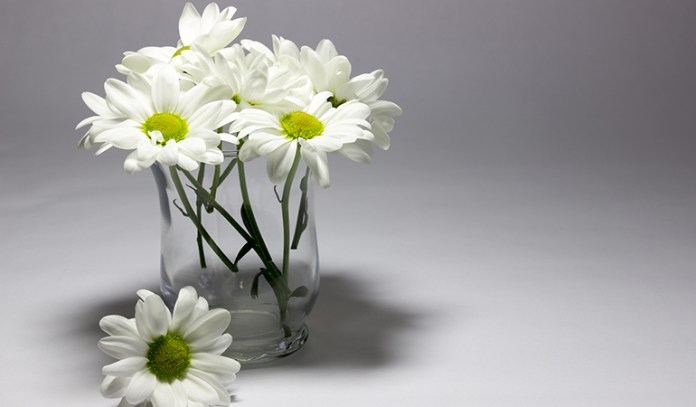 daisies can cause allergic reactions