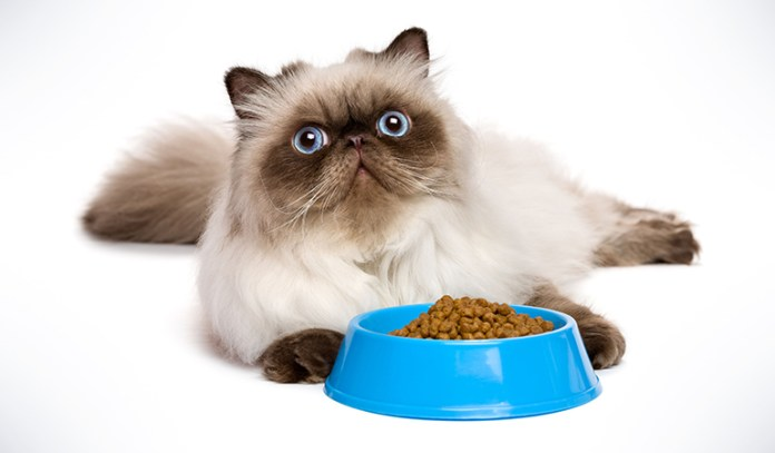 Just because your cat is enjoying its food, doesn't mean it is completely healthy for it contain chemical flavor enhancers.