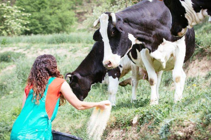 Organic Beef Has Omega-3 Fats