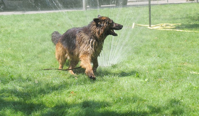 adding a sprinkler or two wont hurt you, especially if it helps your dog to play around and also be cool from the heat
