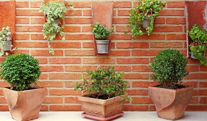 Best Plants For Outdoor Vertical Gardening
