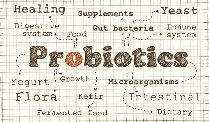 Probiotics Balances Your Intestinal System