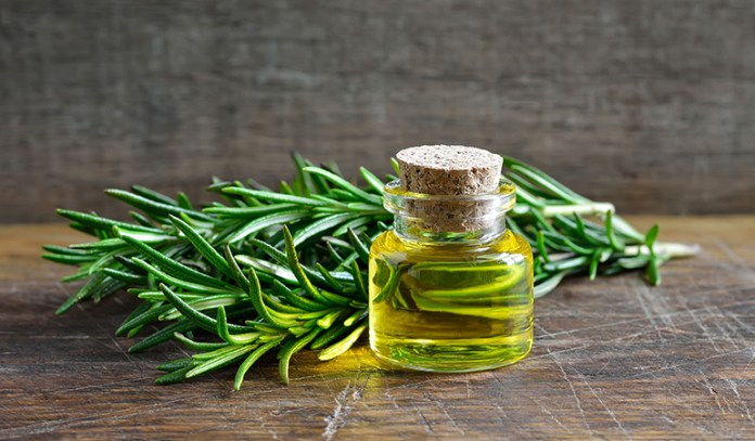 Rosemary Benefits Everyone From Nervous Nursing Students To Seniors