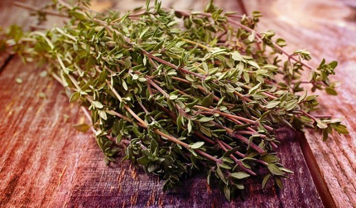 Make Thyme Tea Or Rub It On Your Chest