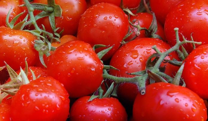 lemon a fruit or vegetable tomato