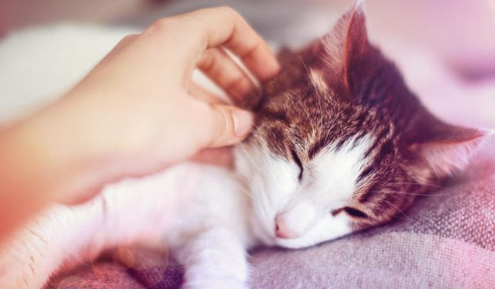Cats could become inactive due to cancer