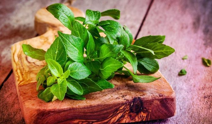 Basil is known for its antiseptic and antibacterial properties that help fight dandruff issues.