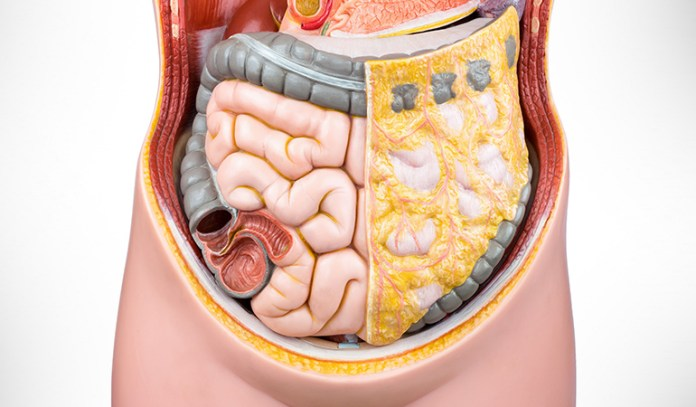 Gut bacteria helps in intestinal function