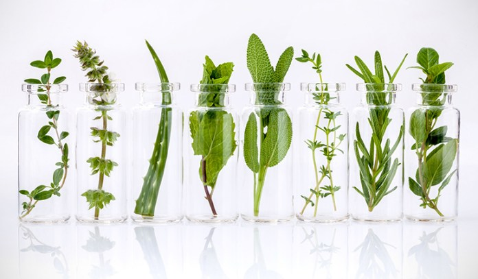 Herbs such as thyme, hyssop, mint, elder flower and others are used to prepare an enema solution