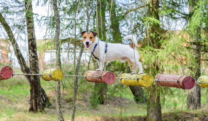 If the doshas remain unbalanced, then it is harmful for your dog and can cause lots of problems.