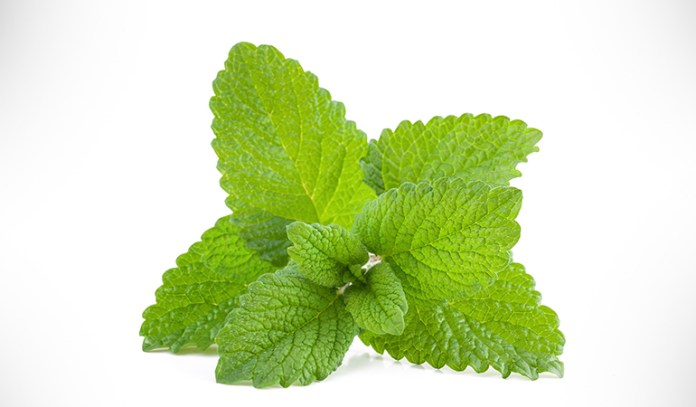 Lemon balm leaves and flowers can help with ADHD