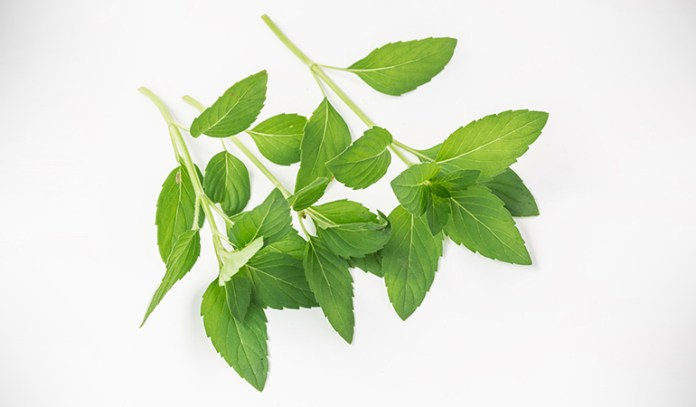 Peppermint oils can soothe ADHD