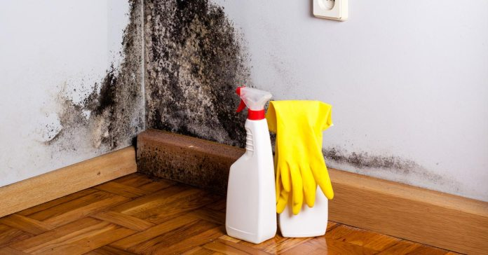 Mold illness can be problematic for the body