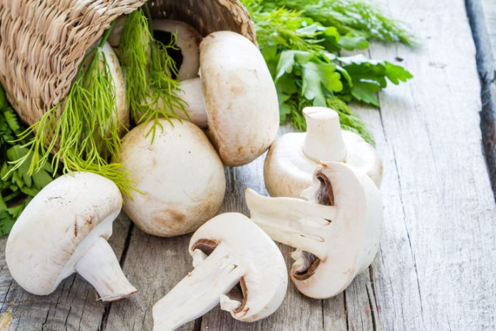 Mushrooms Can Help Fight Cancer