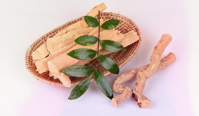 Tongkat Ali Roots combats stress-related fatigue)