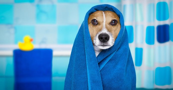 Homemade Dog Shampoo Recipes
