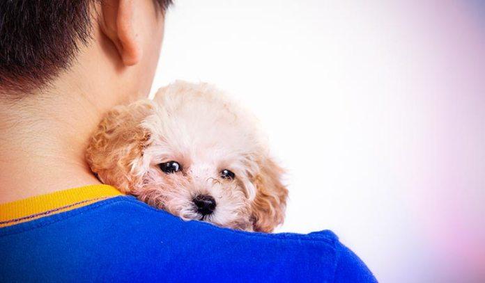.Cuddling pets