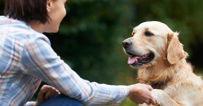 Dog Etiquette Rules Owners Need To Know
