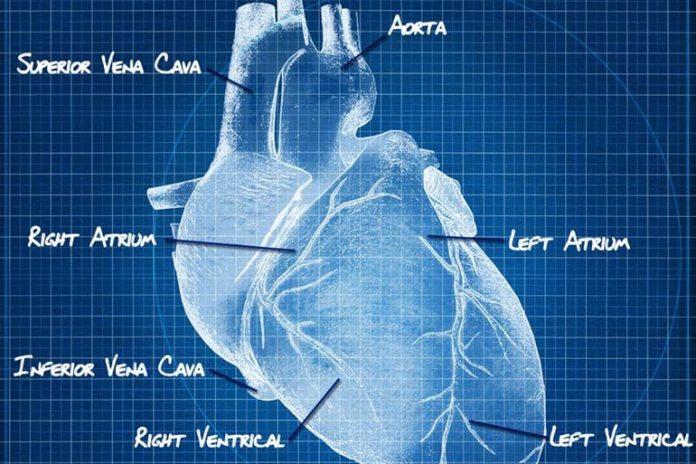 right ventricle fails in right heart failure