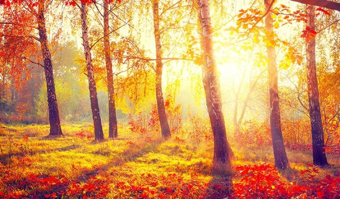 Sunlight is a natural and effective way to reduce and prevent anxiety
