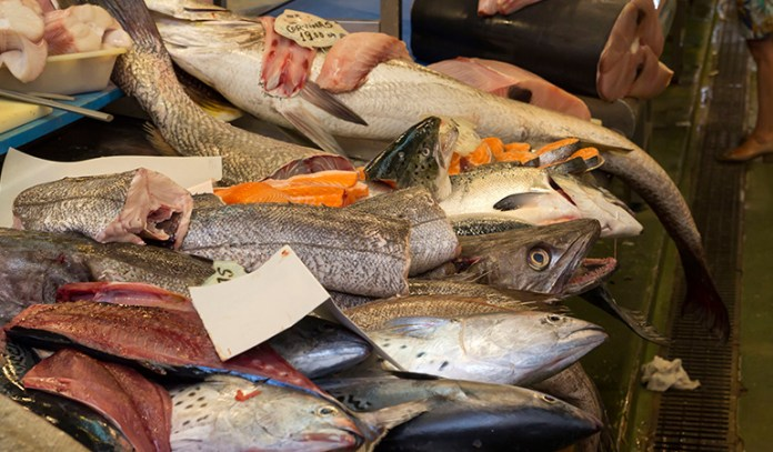 Wild fish contain adequate protein and healthy fats