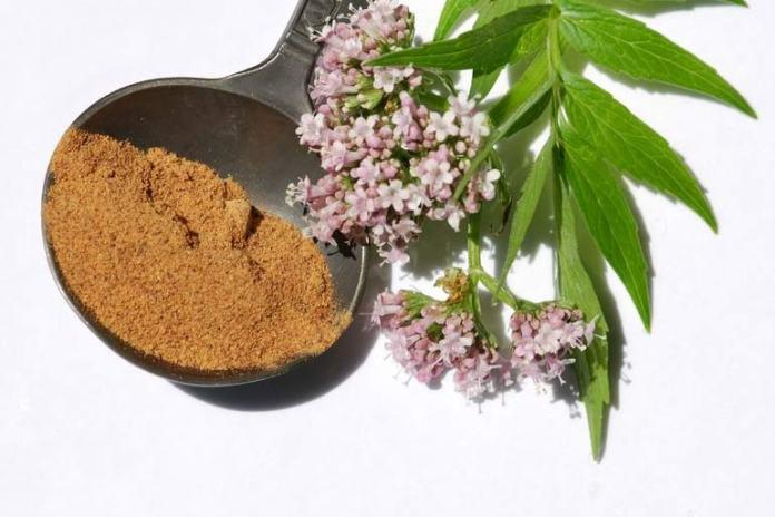 Valerian Root May Treat Sleep Apnea Symptoms