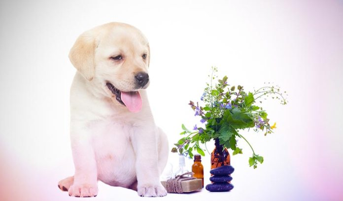 Essential oils must not be used on small pets without a vet's supervision.