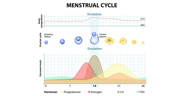 changes in vaginal discharge during a menstrual cycle