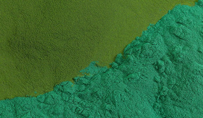 Chlorophyll reduces oxidative damage