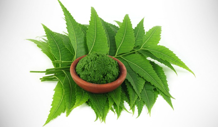 Neem leaves helps dissolve the excess mucus formation