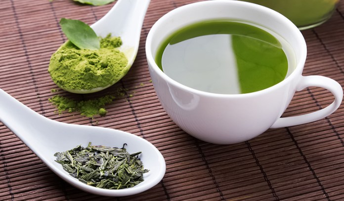 Green tea is powerful in stimulating the respiration rate of brown adipose tissue