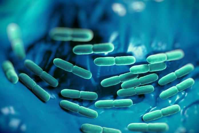 Probiotics regulate the balance of good and bad bacteria in the gut