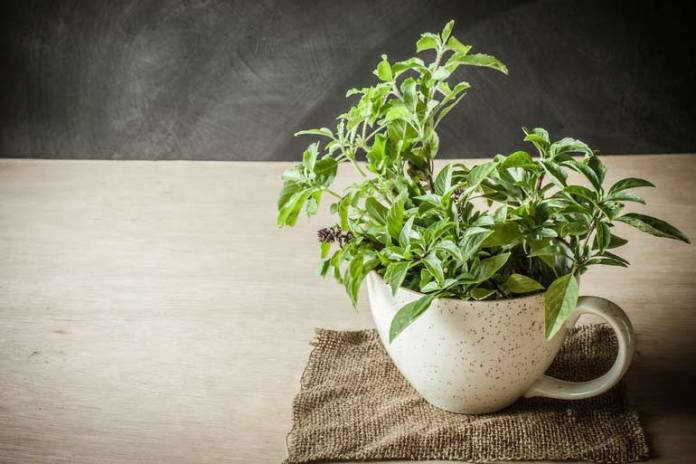 Holy basil helps to release tension