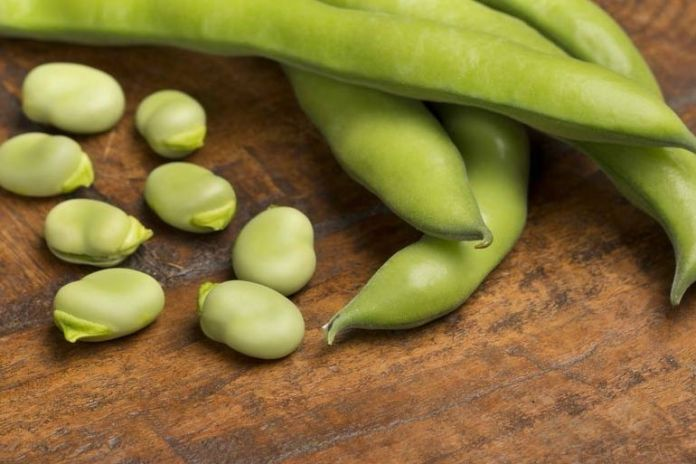 Those who suffer from migraines should avoid flava beans