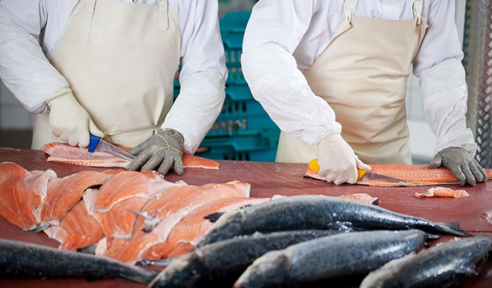 Farm-raised salmon could be toxic.