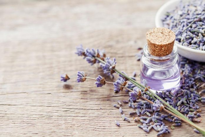 Lavender oil relieves stress