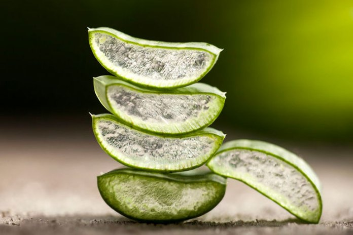 Aloe vera helps repair damaged skin