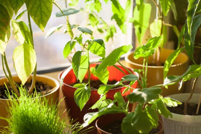 Gardening keeps you close to nature and relieves stress