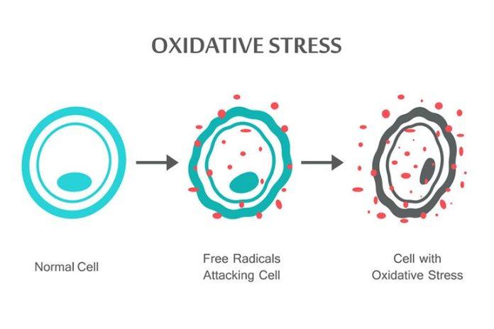 Promotes oxidative damage with radio wave exposure