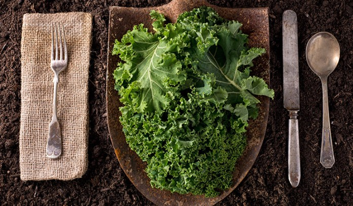 100 grams of kale has 4.28 grams of protein.