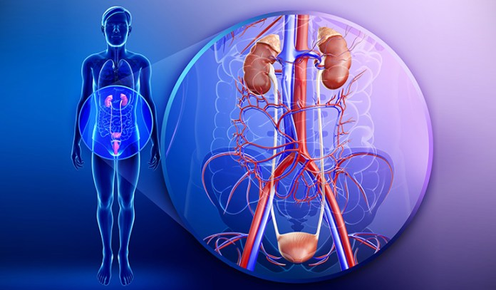 Hyperglycemia, and impaired renal tubes cause glycosuria
