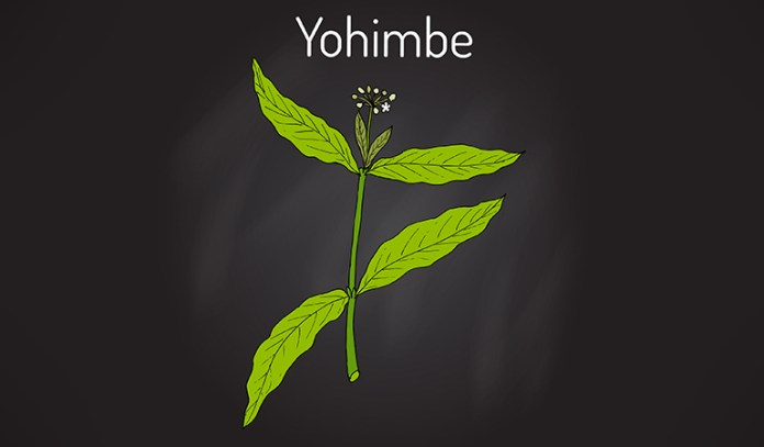Yohimbe extracts can cause liver and kidney problems