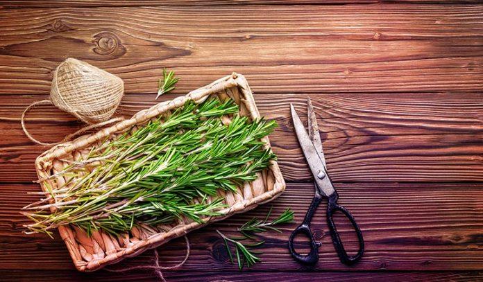 Rosemary has strong anti-inflammatory properties