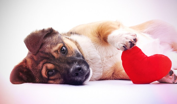 Owning A Dog May Make Your Heart Healthier